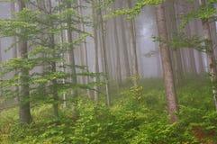 Bosque de la montaña Imagen de archivo libre de regalías