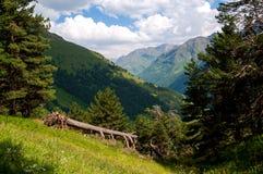 Bosque de la montaña fotografía de archivo libre de regalías