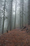 Bosque de la montaña Imágenes de archivo libres de regalías