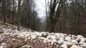 Bosque de la montaña con los árboles cubiertos de musgo Cuestas de piedra con las hojas caidas del bosque del otoño en tiempo nub almacen de metraje de vídeo