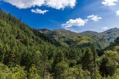 Bosque de la montaña de Bolivia fotos de archivo libres de regalías