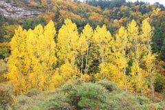 Bosque de la montaña de Colorized Imagenes de archivo