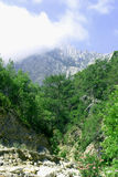 Bosque de la montaña de la mañana Imagen de archivo libre de regalías