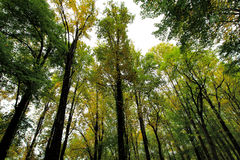 Bosque de la montaña de Rocky Lush Green Great Smoky imagen de archivo libre de regalías