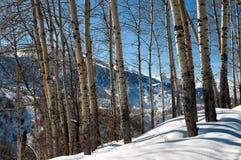 Bosque de la montaña del invierno Imagen de archivo