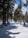 Bosque de la montaña del invierno con la pista de senderismo nevada y cielo azul con las nubes Fotografía de archivo