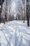Bosque de la montaña del invierno con la pista de senderismo nevada y el cielo claro Foto de archivo