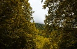 Bosque de la montaña del otoño con los árboles foliares en Gaucasus, Mezmay Fotos de archivo