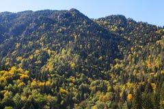 Bosque de la montaña en la caída Imagenes de archivo
