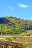 Bosque de la montaña en el otoño Imágenes de archivo libres de regalías
