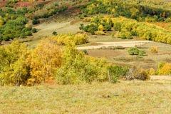 Bosque de la montaña en el otoño Imagenes de archivo