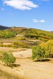 Bosque de la montaña en el otoño Fotografía de archivo libre de regalías