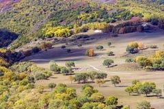 Bosque de la montaña en el otoño Fotografía de archivo