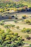 Bosque de la montaña en el otoño Fotos de archivo libres de regalías