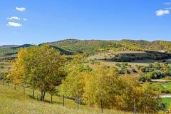 Bosque de la montaña en el otoño Foto de archivo