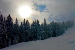 Bosque de la montaña en invierno Imagenes de archivo