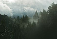 Bosque de la montaña en nubes imagen de archivo libre de regalías
