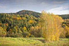 Bosque de la montaña en puesta del sol del otoño Fotografía de archivo libre de regalías