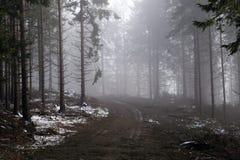 Bosque de la montaña en una niebla iluminada por la luz del sol Foto de archivo