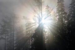 Bosque de la montaña en una niebla iluminada por la luz del sol Imágenes de archivo libres de regalías