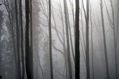 Bosque de la montaña en una niebla iluminada por la luz del sol Imagen de archivo
