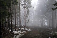 Bosque de la montaña en una niebla iluminada por la luz del sol Fotos de archivo