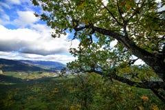 Bosque de la montaña encima de una montaña en Crimea Imágenes de archivo libres de regalías