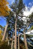 Bosque de la montaña encima de una montaña en Crimea Foto de archivo libre de regalías