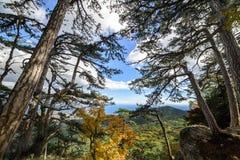 Bosque de la montaña encima de una montaña en Crimea Imagenes de archivo