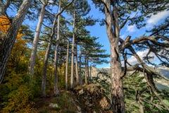 Bosque de la montaña encima de una montaña en Crimea Fotos de archivo libres de regalías