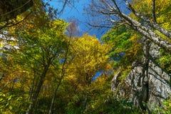 Bosque de la montaña fría Foto de archivo