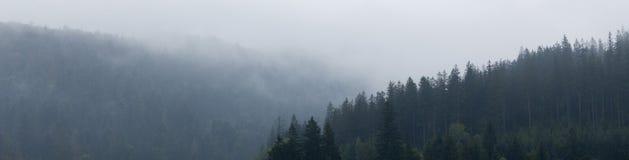 Bosque de la monta?a en la niebla, atm?sfera de maderas Fondo salvaje de la naturaleza del ambiente hermoso fotografía de archivo libre de regalías