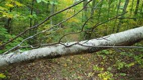 Bosque de la naturaleza Imagenes de archivo