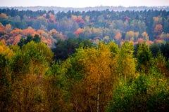 Bosque de la naturaleza del otoño Foto de archivo