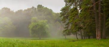 Bosque de la niebla Imagen de archivo
