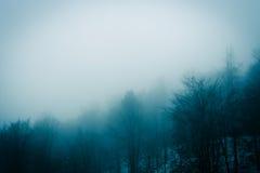 Bosque 5 de la niebla Foto de archivo libre de regalías
