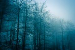 Bosque 2 de la niebla Foto de archivo libre de regalías