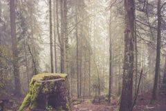 Bosque de la niebla Foto de archivo
