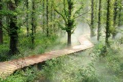 Bosque de la niebla de la mañana Fotos de archivo libres de regalías