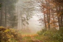 Bosque de la niebla de la mañana Foto de archivo libre de regalías