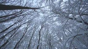 Bosque de la nieve almacen de video