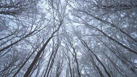 Bosque de la nieve almacen de metraje de vídeo
