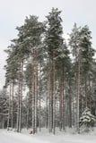 Bosque de la nieve Fotos de archivo