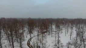 Bosque de la nieve del abejón metrajes
