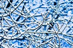 Bosque 1 de la nieve del invierno Imágenes de archivo libres de regalías