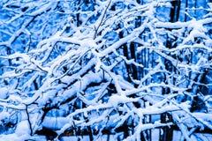 Bosque 2 de la nieve del invierno Foto de archivo libre de regalías