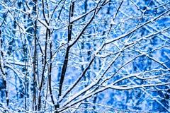 Bosque 7 de la nieve del invierno Fotografía de archivo libre de regalías