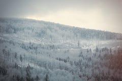 Bosque de la nieve del misterio imágenes de archivo libres de regalías