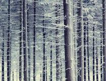 Bosque de la nieve del misterio fotografía de archivo