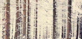 Bosque de la nieve del misterio Foto de archivo libre de regalías